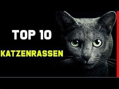 top  beliebtesten katzenrassen die schoensten katzen