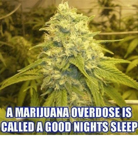 Marijuana Overdose Meme - funny overdose memes of 2017 on sizzle relaters
