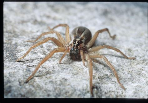 insect spider  kin facts mdc discover nature
