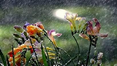 Rainy Nature Experience