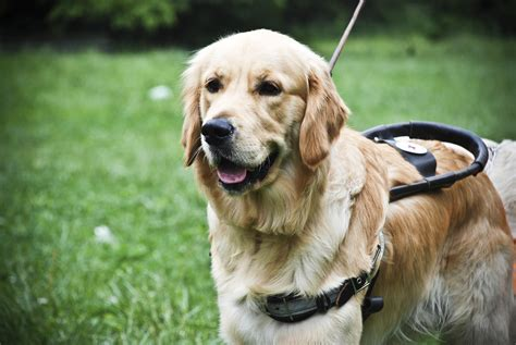 The Guide by The Guide Dogs Seeing In The