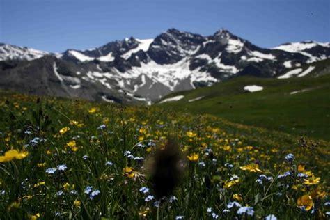 fiori do bach come scegliere la floriterapia con i fiori di bach