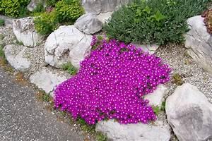 Pflanzen Für Steingarten : steingarten bepflanzen hier finden sie passende pflanzen ~ Michelbontemps.com Haus und Dekorationen