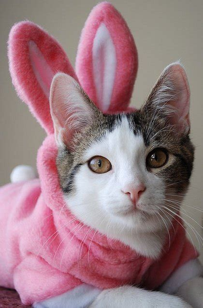 adorable dogs  cats dressed   easter animals zone