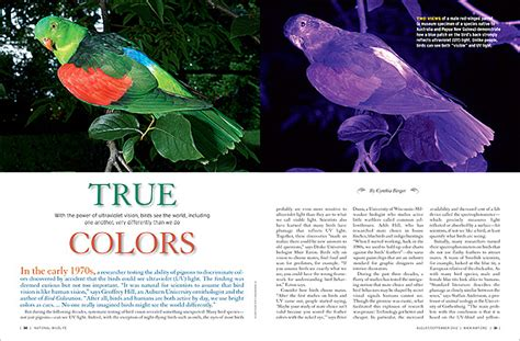 do birds see color true colors how birds see the world