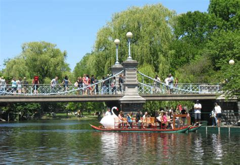 Swan Boats Charles River by Boston Swan Boats Top Garden Attraction