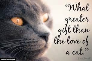 cat sayings best cat quotes quotesgram