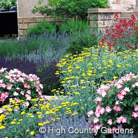 high country gardens nursery to grow
