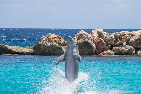 Dolphin Encounter at Dolphin Cove – Errol Flynn Tours Jamaica