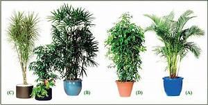 Arbuste D Intérieur : arbuste tous les fournisseurs bonsais d 39 exterieur s ~ Premium-room.com Idées de Décoration