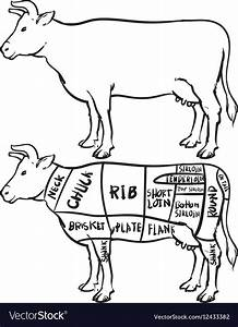 Diagram Of A Cow