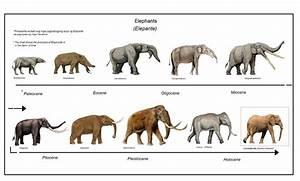Miscellaneous Images   Prehistoric Florida