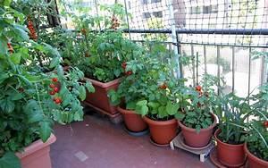 Apartment Gardening Ideas  Container Gardens For Apartment