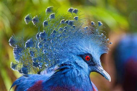 Extreme Crest Feathers: 10 Reasons Why Crest is Best (With