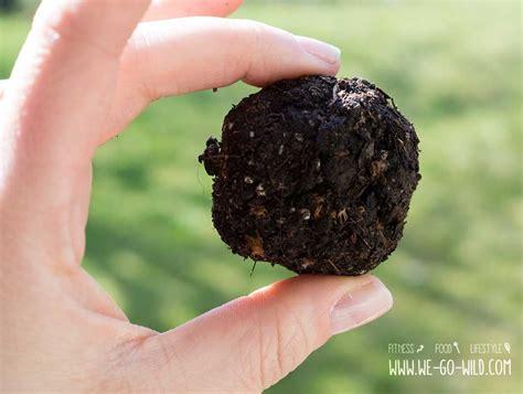 seedbombs selber machen blumenbomben selber machen in 5 schritten zu diy seedbombs