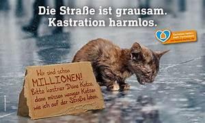 Was Brauchen Katzen : katzen ~ Lizthompson.info Haus und Dekorationen
