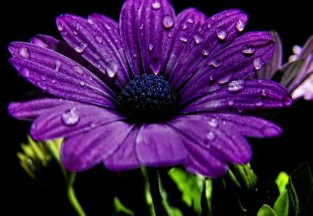 750x1334 beautiful 3d flower cg purple flower 3d and cg abstract background