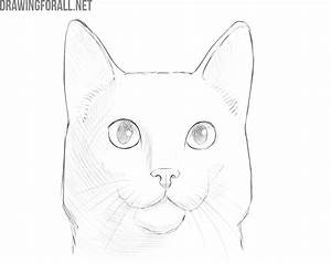 How, To, Draw, A, Cat, Face