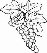 Grapes Grape Coloring Bunch Drawing Vine Pages Drawings Printable Sketch Clipart Fruits Fruit Clip Vegetables Print Wine Leaves Sheets Pencil sketch template