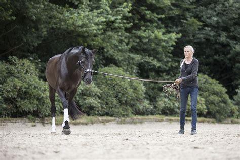 bodenarbeit ein interview mit sigrid schoepe mein pferd