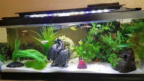 types  fish   fish tank youtube