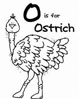 Ostrich Coloring Ox Musk Pages Printable Getcolorings Clipart Colorluna sketch template