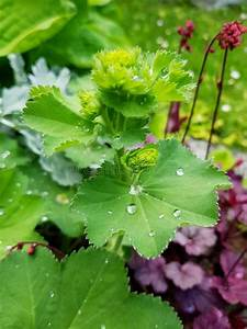 Raindrops, On, Leaves, Beautiful, Leaf, With, Little, Drops, After, Rain, Stock, Photo