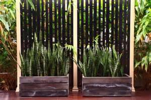 warm home interiors the best outdoor plants for shaded areas