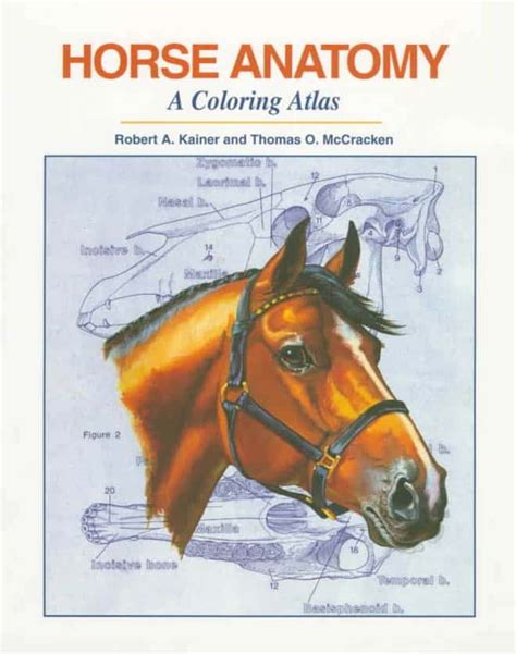 Coloring Atlas Of Human Anatomy by Anatomy A Coloring Atlas 2nd Edition Vetbooks