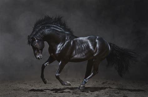 Dark Horse Black Background
