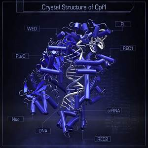 Crystal Structure Of Cpf1 In Complex With Guide Rna And