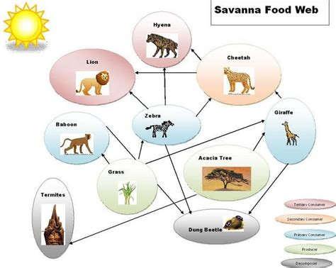 cuisine web grassland biome food web with trophic levels food chains