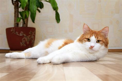 Cleaning Your House The Cat And Earth Friendly Way Catster
