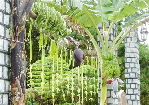 Reasons Behind Hanging Mango Leaves At The Entrance