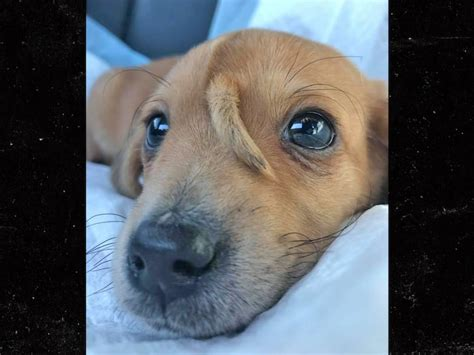 narwhal  rescue puppy adoption applications halted