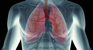 What Happens When Blood Reaches The Lungs