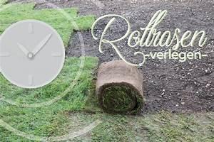 Wann Rollrasen Verlegen : rollrasen verlegen wann ist der beste zeitpunkt infos zu jahreszeiten ~ Buech-reservation.com Haus und Dekorationen
