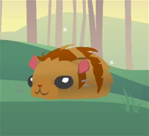 pet hamster animal jam wiki fandom powered  wikia