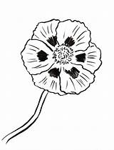 Poppy Coloring Printables Samanthasbell sketch template