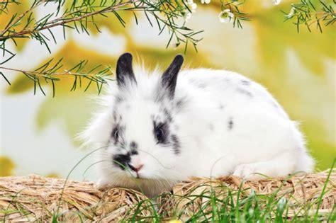 alimentazione conigli alimentazione roditori tutto ze