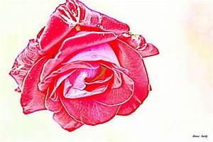 Blume Der Liebe : bild rose2 blumen leben romantik von klaashartz bei ~ Articles-book.com Haus und Dekorationen
