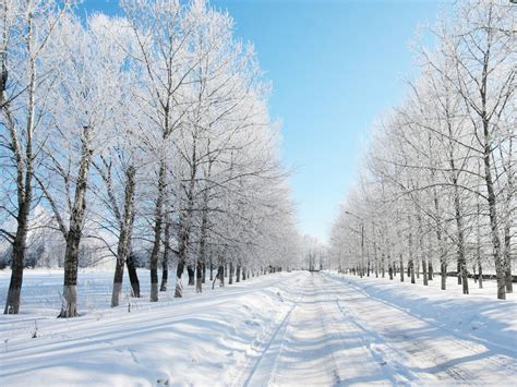 White Snow Scene Hd Wallpapers Free Download