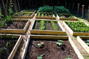 Progress in the raised bed vegetable garden   The Modern ...