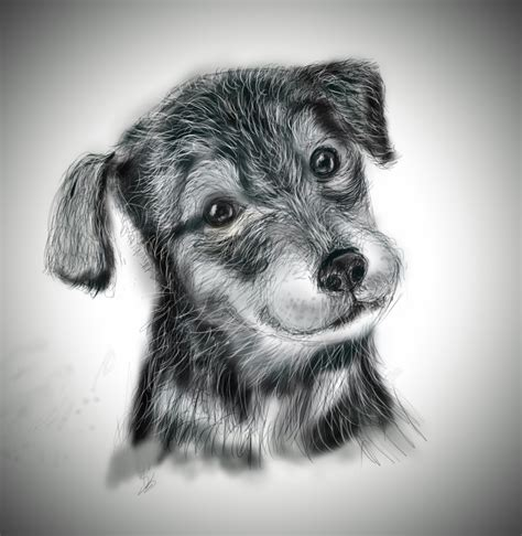 quick sketch   dog  drawing tablet pencils sketches