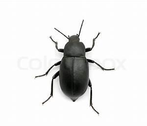 Käfer Im Garten : schwarze k fer stock foto colourbox ~ Lizthompson.info Haus und Dekorationen