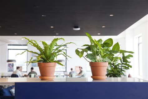 best office desk plants how to choose the best office plant for your work space