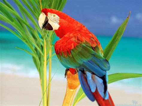 3d Birds Wallpapers by Sfissa Capture The Pirate Flag August 23 2014 Arrrr