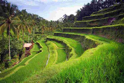 Beautiful Bali Intrepid Travel Us