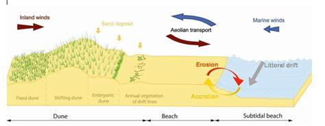 gc6wt0y freshwater coastal sand dune burlington beach