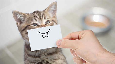 welche sat schüssel ist die beste welche katzenversicherung ist die beste so finden sie die richtige petplan